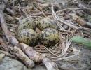 Vibe æg IMG_4312