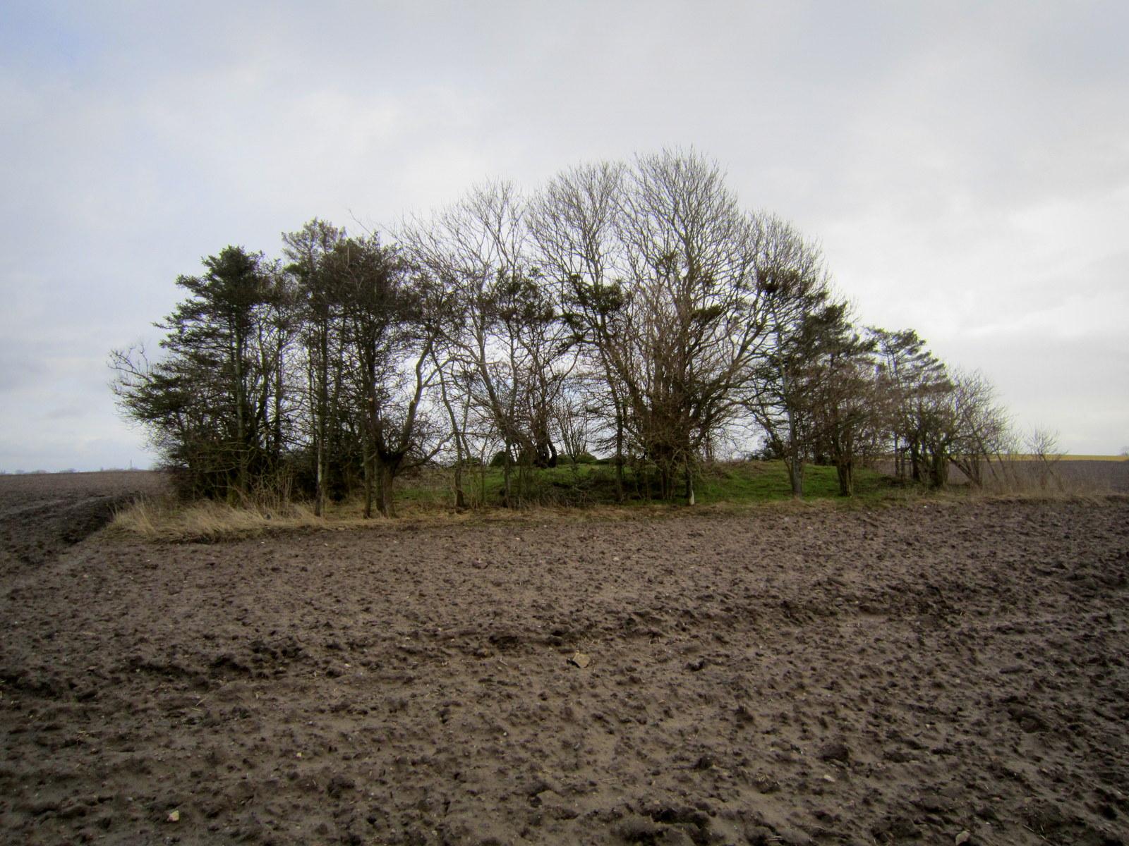 Midt på marken ligger Langdyssen Heininge, med de tydelige sten på toppen af højen.
